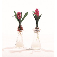 Hyacinth op glas